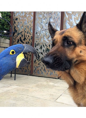 Dog-and-Parrot