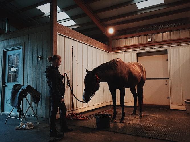 Funny Horse Videos