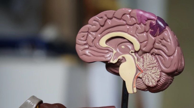 Heart disease can have long-term impact on the brain, study says