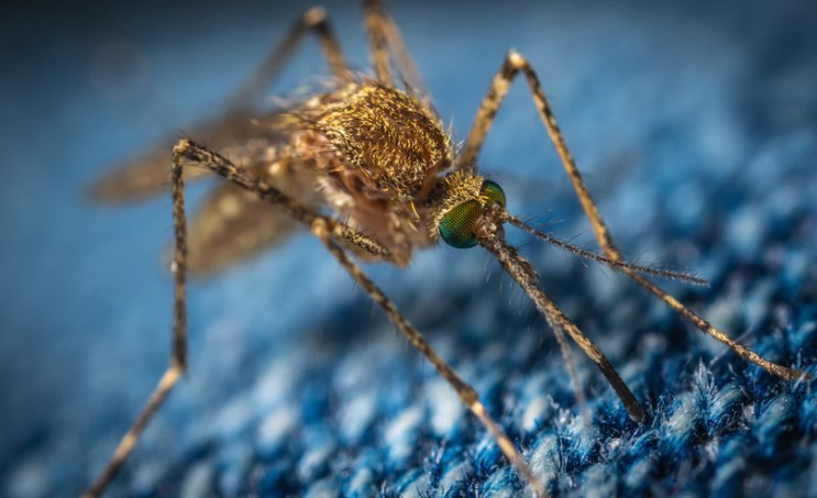 Mosquitoes have been almost completely wiped out on two Chinese islands