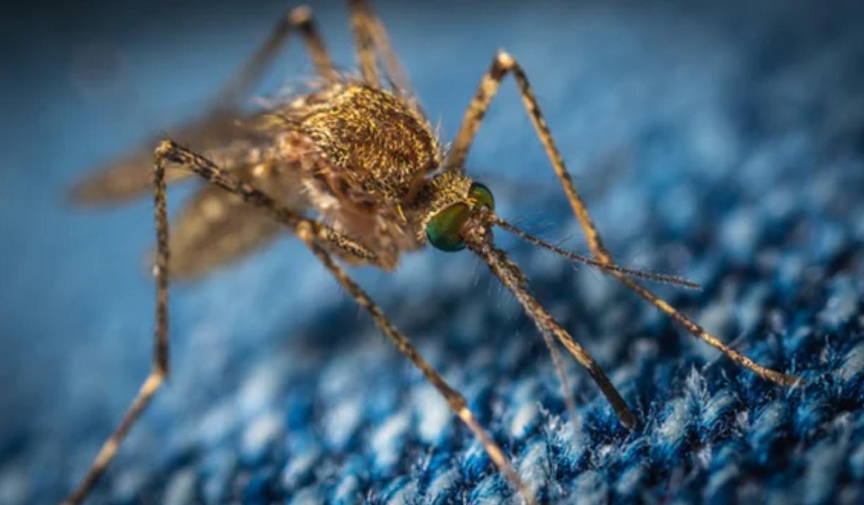 Death Toll Rises From EEE Virus