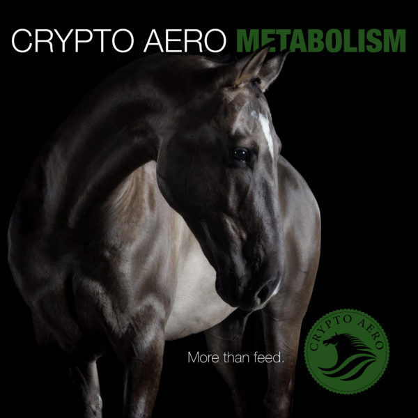 Crypto Aero- More Than feed