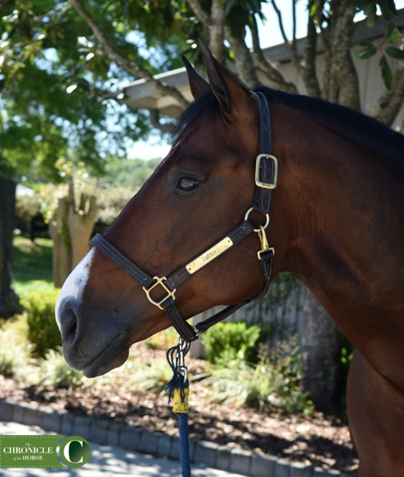 Behind The Stall Door With: Lafitte De Muze
