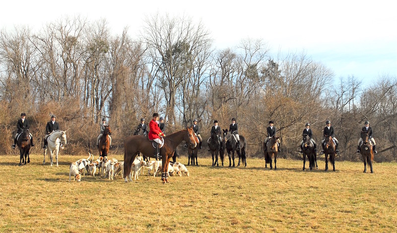 Off-Track Standardbreds Get Their Day In The Field